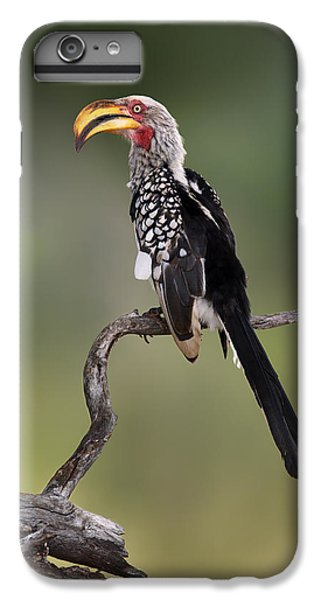 Southern Yellowbilled Hornbill IPhone 6 Plus Case by Johan Swanepoel