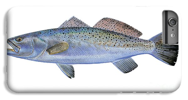Speckled Trout IPhone 6 Plus Case by Carey Chen