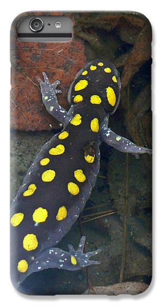 Spotted Salamander IPhone 6 Plus Case by Christina Rollo