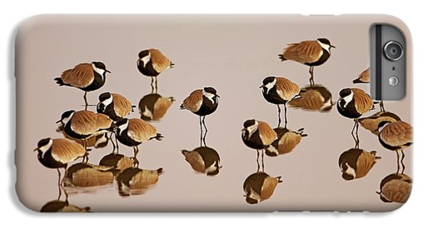Spur-winged Lapwing (vanellus Spinosus) IPhone 6 Plus Case by Photostock-israel