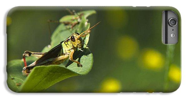 Sunny Green Grasshopper IPhone 6 Plus Case by Christina Rollo