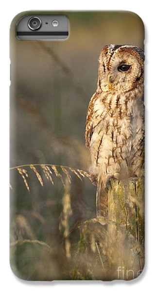 Tawny Owl IPhone 6 Plus Case by Tim Gainey
