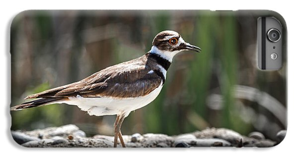 The Killdeer IPhone 6 Plus Case by Robert Bales