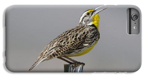 The Meadowlark Sings  IPhone 6 Plus Case by Jeff Swan
