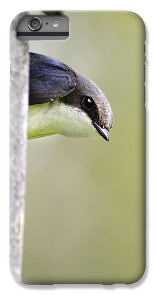 Tree Swallow Closeup IPhone 6 Plus Case by Christina Rollo