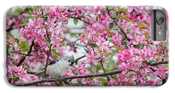 Tufted Titmouse In A Pear Tree IPhone 6 Plus Case by Bill Wakeley