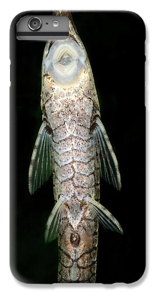 Twig Catfish Or Stick Catfish IPhone 6 Plus Case by Nigel Downer