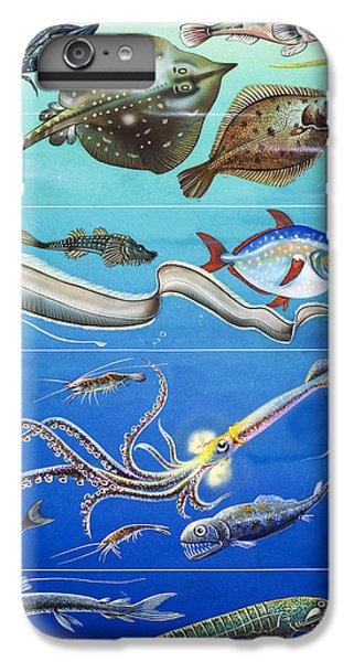 Underwater Creatures Montage IPhone 6 Plus Case by English School