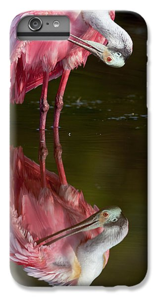Usa, Florida, Everglades National Park IPhone 6 Plus Case by Jaynes Gallery