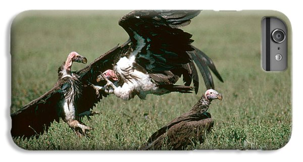 Vulture Fight IPhone 6 Plus Case by Gregory G. Dimijian, M.D.