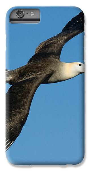 Waved Albatross Diomedea Irrorata IPhone 6 Plus Case by Panoramic Images