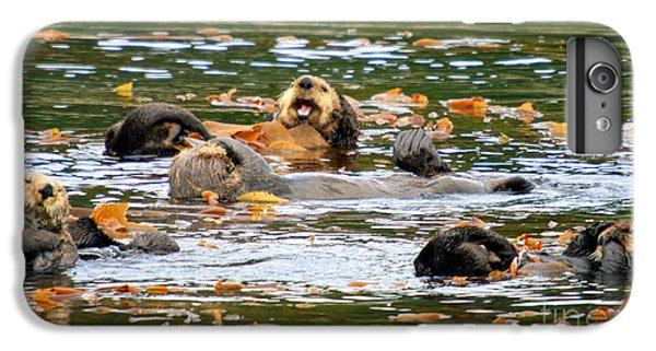 We Otter Be In Pictures IPhone 6 Plus Case by Bob Hislop