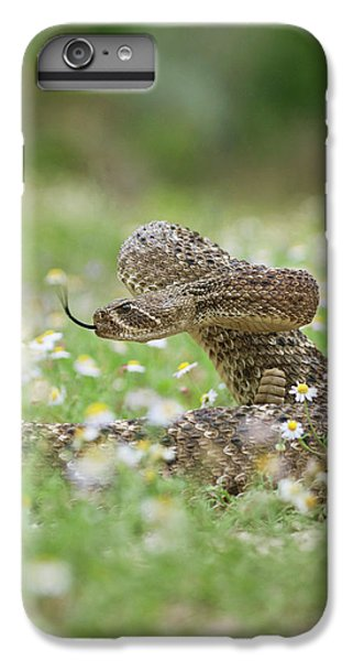 Western Diamondback Rattlesnake IPhone 6 Plus Case by Larry Ditto