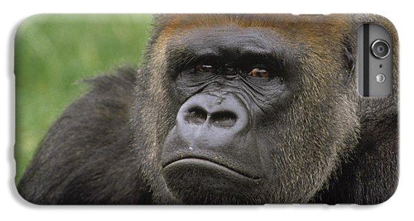 Western Lowland Gorilla Silverback IPhone 6 Plus Case by Gerry Ellis