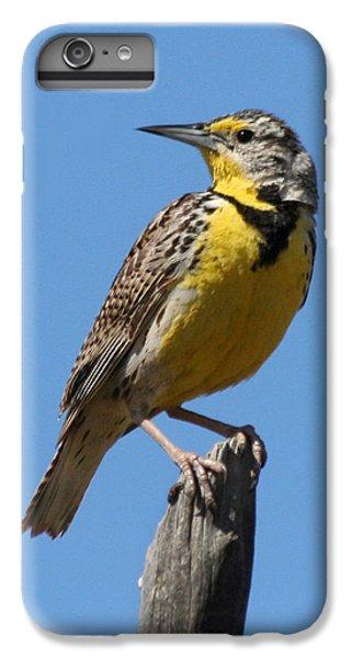 Western Meadowlark Perching IPhone 6 Plus Case by Bob and Jan Shriner