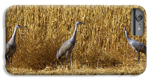 Where Is The Corn IPhone 6 Plus Case by Mike  Dawson