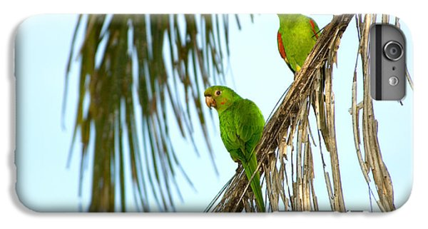 White-eyed Parakeets, Brazil IPhone 6 Plus Case by Gregory G. Dimijian, M.D.