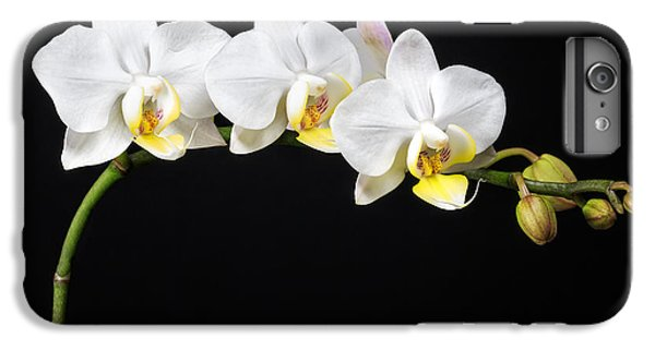 White Orchids IPhone 6 Plus Case by Adam Romanowicz