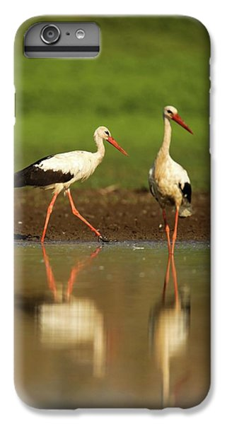 White Stork (ciconia Ciconia) IPhone 6 Plus Case by Photostock-israel