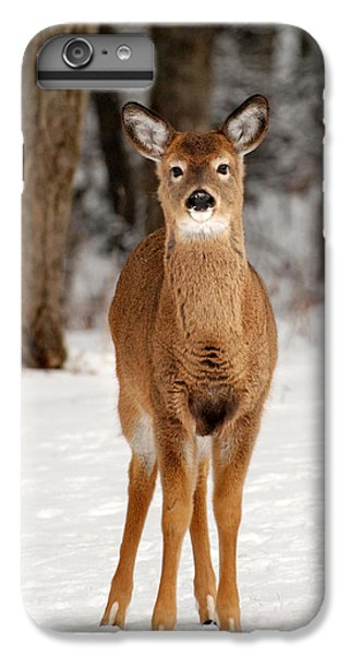 Whitetail In Snow IPhone 6 Plus Case by Christina Rollo