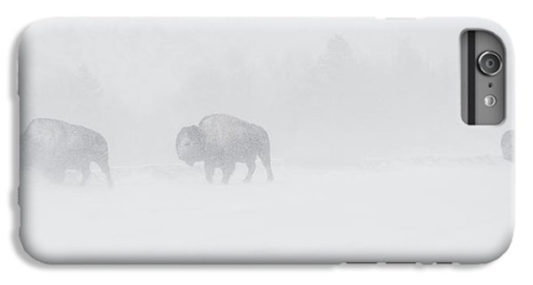 Whiteout IPhone 6 Plus Case by Sandy Sisti