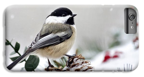 Winter Chickadee IPhone 6 Plus Case by Christina Rollo