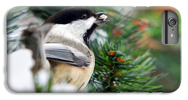 Winter Chickadee With Seed IPhone 6 Plus Case by Christina Rollo