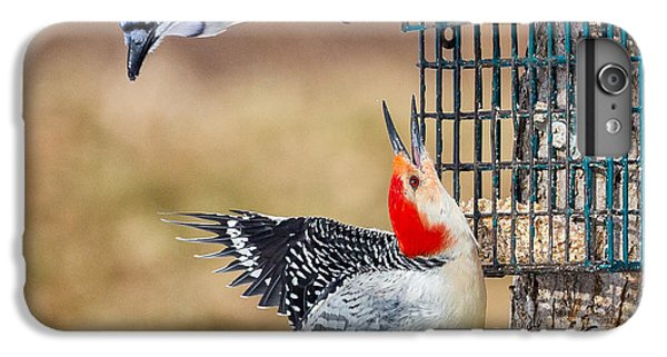 Woodpeckers And Blue Jays Square IPhone 6 Plus Case by Bill Wakeley