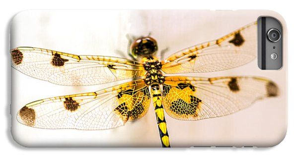 Yellow Dragonfly Pantala Flavescens IPhone 6 Plus Case by Iris Richardson