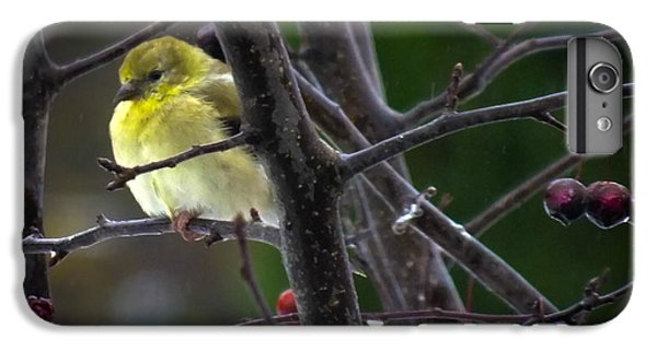 Yellow Finch IPhone 6 Plus Case by Karen Wiles