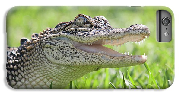 Young Alligator With Mouth Open IPhone 6 Plus Case by Piperanne Worcester
