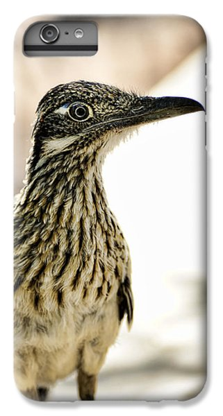 Greater Roadrunner  IPhone 6 Plus Case by Saija  Lehtonen
