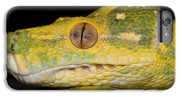 Green Tree Python IPhone 6 Plus Case by Dante Fenolio