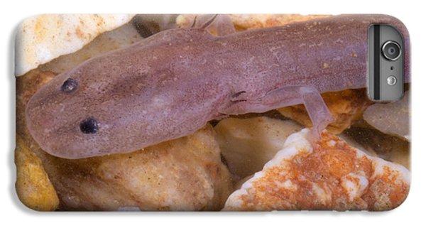 Ozark Blind Cave Salamander IPhone 6 Plus Case by Dante Fenolio