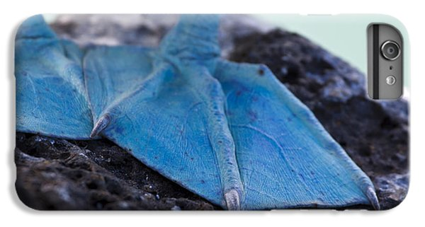 Blue Footed Booby IPhone 6 Plus Case by Dave Fleetham