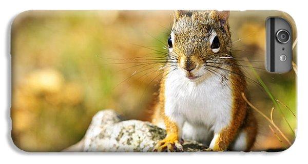 Cute Red Squirrel Closeup IPhone 6 Plus Case by Elena Elisseeva