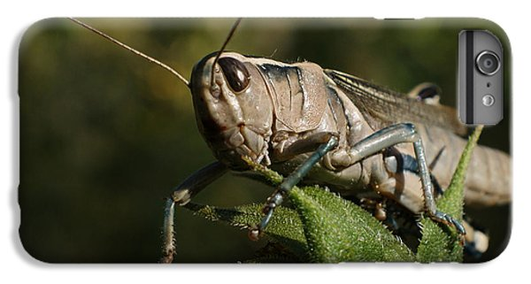 Grasshopper 2 IPhone 6 Plus Case by Ernie Echols