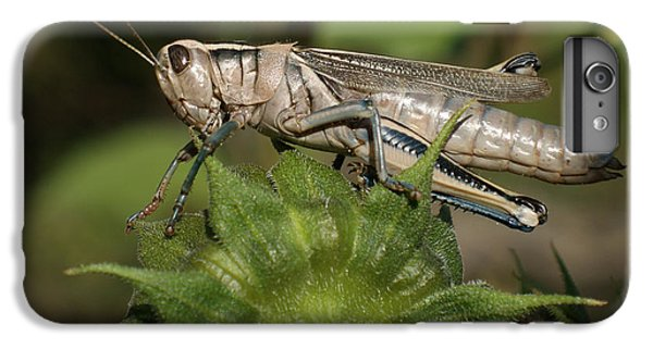Grasshopper IPhone 6 Plus Case by Ernie Echols