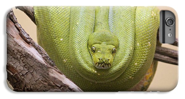 Green Tree Python IPhone 6 Plus Case by Suzanne Gaff