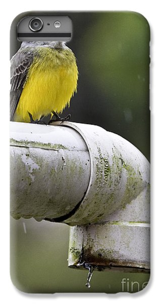 Grey-capped Flycatcher IPhone 6 Plus Case by Heiko Koehrer-Wagner