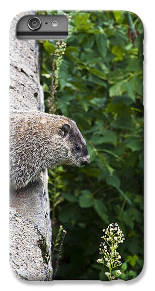 Groundhog Day IPhone 6 Plus Case by Bill Cannon