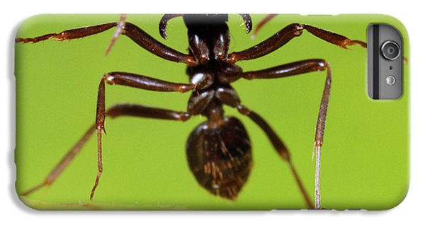 Japanese Slave-making Ant Polyergus IPhone 6 Plus Case by Satoshi Kuribayashi