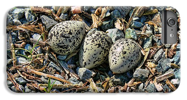 Killdeer Bird Eggs IPhone 6 Plus Case by Jennie Marie Schell