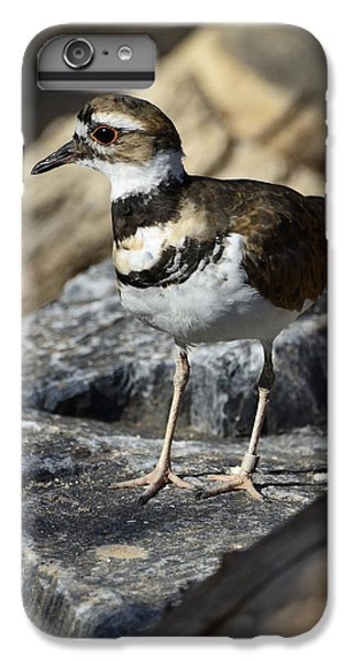 Killdeer IPhone 6 Plus Case by Saija  Lehtonen