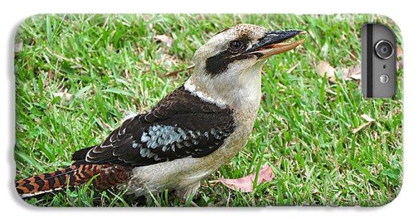 Laughing Kookaburra IPhone 6 Plus Case by Kaye Menner