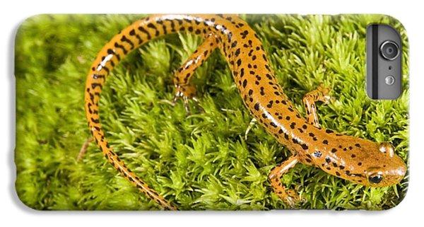 Longtail Salamander Eurycea Longicauda IPhone 6 Plus Case by Jack Goldfarb