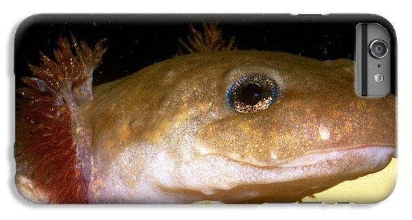Pacific Giant Salamander Larva IPhone 6 Plus Case by Dante Fenolio