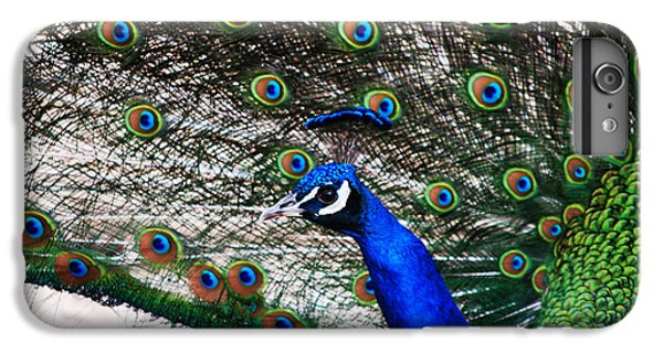 Proud Peacock IPhone 6 Plus Case by Sheryl Cox