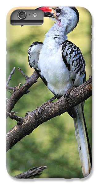 Red-billed Hornbill IPhone 6 Plus Case by Tony Beck