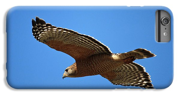 Red Shouldered Hawk In Flight IPhone 6 Plus Case by Carol Groenen